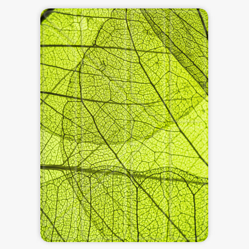 Kryt iSaprio Smart Cover na iPad - Leaves - iPad 2 / 3 / 4